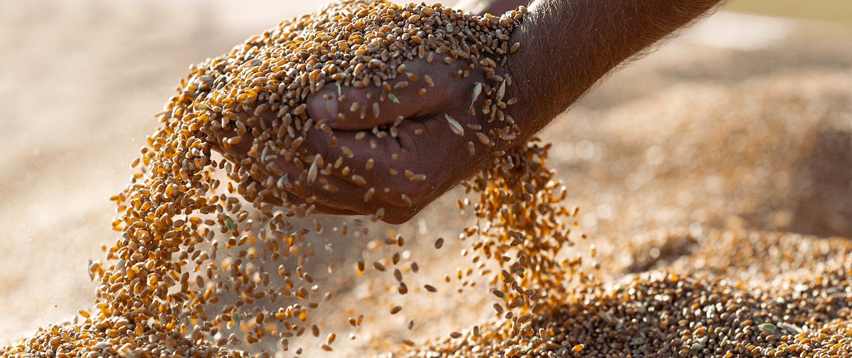 photovoltaïque stockage céréales